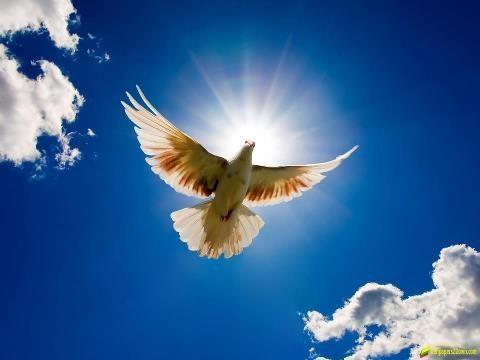 पंख ……….