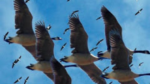 Migration : Dont panic!