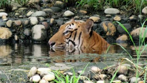 TISA Delhi SHG Cum Social Event at Zoo Invitation – 18th March, 2018